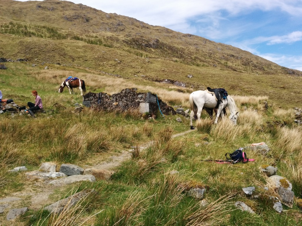 kintail horses
