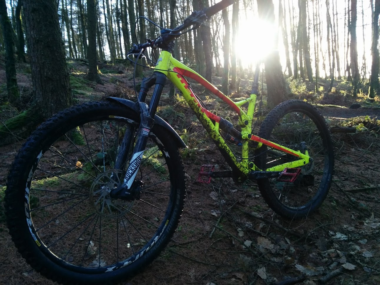 Nukeproof Mega 290 in woods